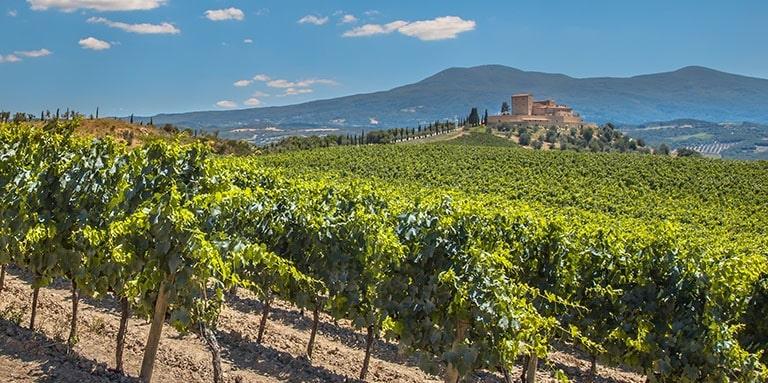 Vitigni in Toscana